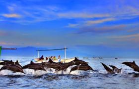 Paket Wisata Lovina Tour Bali Murah Dan Nyaman