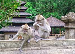 Paket Tour Bali Hemat 3 Hari 2 Malam